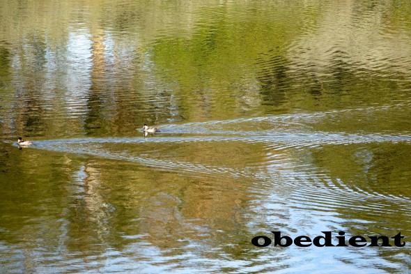 iPhotoBorderFX obedient