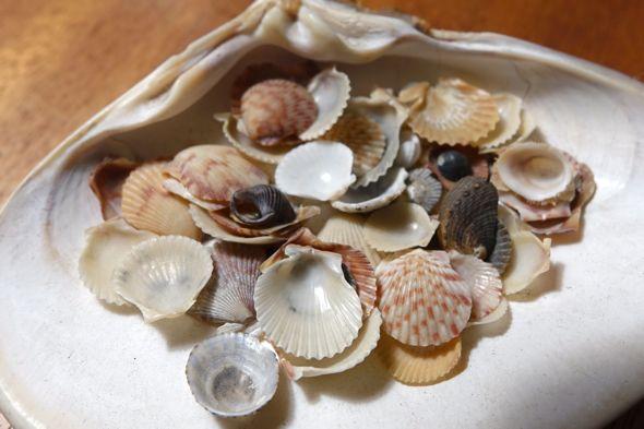 DSC00945 tiny shells