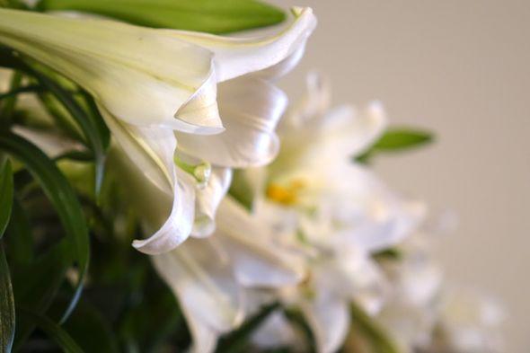 DSC01477 easter lilies